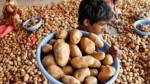 Highest In A Decade Monthly Average Price Of Potato Rs 40 Per Kg
