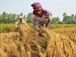 తెలంగాణ రైతులకు గుడ్న్యూస్: కొద్ది రోజుల్లో PM Kisan నిధులు జమ, అందుకే ఆలస్యం
