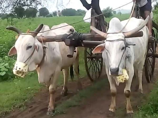 చలాన్ షాకింగ్: ఎడ్లబండికి రూ.1,000 జరిమానా, ఏం జరిగిందంటే?