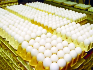 Egg Prices Hike Rs 6 In Retail Markets