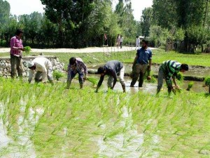 Banks Suggest Easier Loan Rules For Farmers