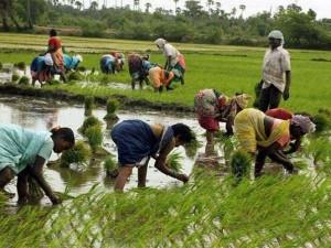Ap Government To Conduct Spandana On Ruthu Bharosa And Pm Kisan Scheme