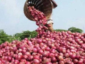 Onion Prices Likely To Be Between Rs 20 In January