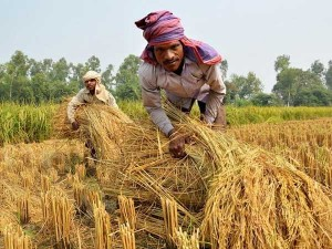 Lakh Farmers Are Waiting For Pm Kisan Funds In Telangana