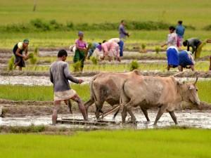 Rs 5 100 Crore Released Under Rythu Bandhu For Rabi Season
