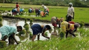 Telangana Budget Rythu Bandhu Scheme To Be Extended To More Ryots
